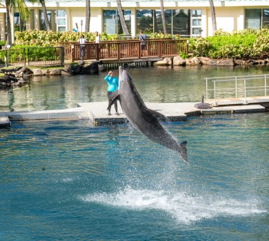 Dolphin Quest at The Kahala