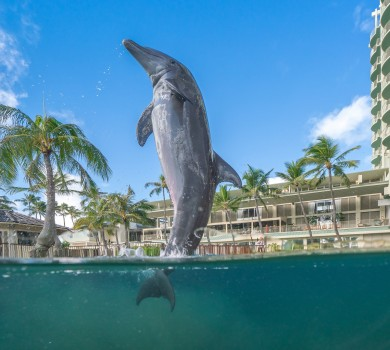 Hawaii Dolphin Encounters